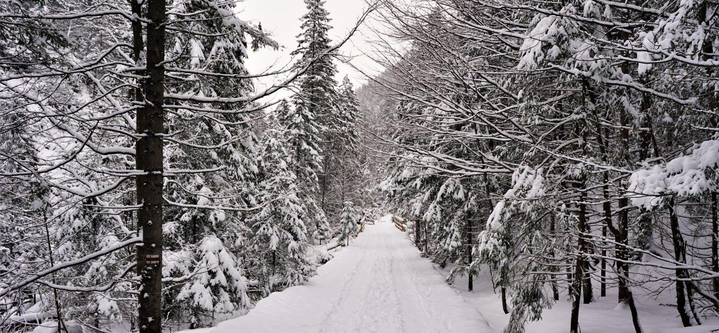 """Dolina Strążyska – Zakopane<h4><img src=""""http://nastepnyprzystanek.pl/wp-content/uploads/2021/01/Kalendarz-ikona.png"""" style=""""width: 30px""""> styczeń 2021</h4>"""